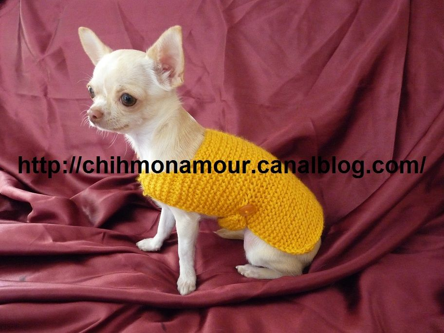 Tricot facile manteau pour chien