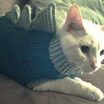 Tricoter pour son chat
