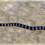 Tricot rayé serpent