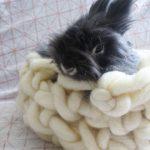 Tricot xxl pour chat