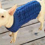 Patron tricot pour animaux