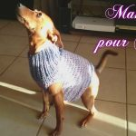 Youtube tricot animaux